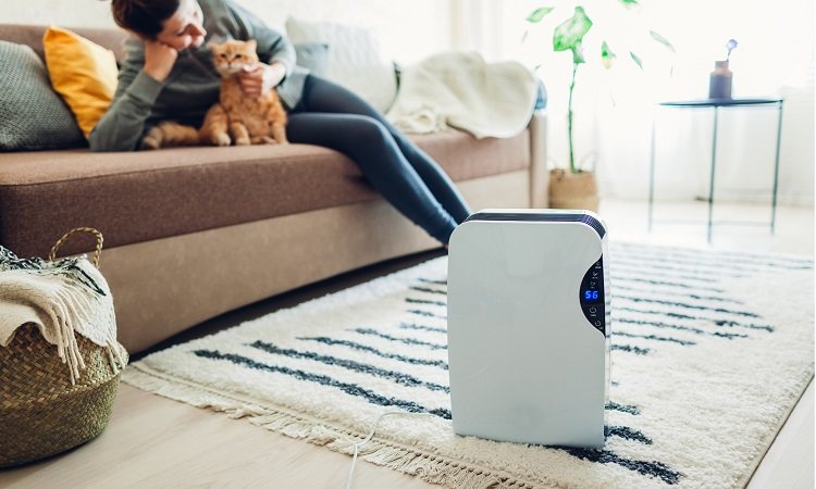 The 7 Best Dehumidifiers For Apartments